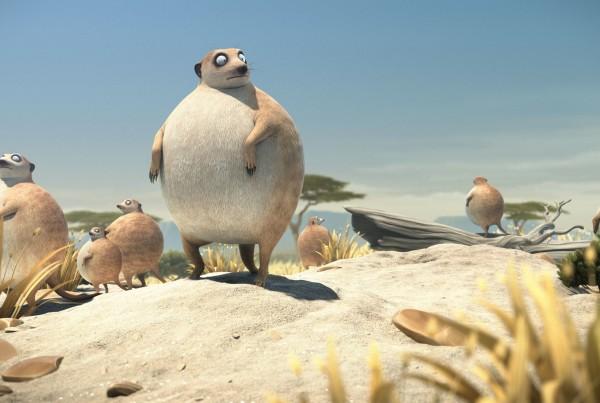 rollin_wild_meerkats_lookout